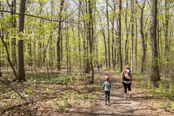 Family hiking at Boyd Big Tree Preserve in Dauphin County PA