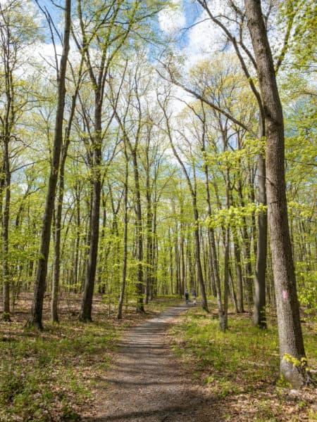Trail at Boyd Big Tree Preserve in Harrisburg PA