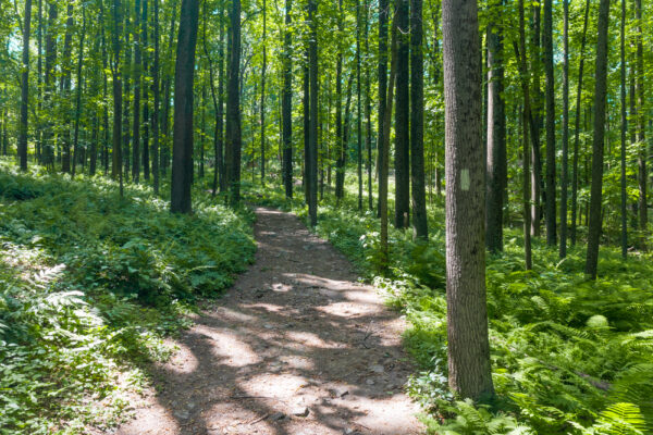 Horse-Shoe Trail in Valley Forge in Pennsylvania