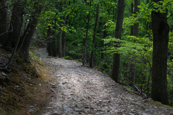 Forested trail on Mount Misery in Valley Forge National Historical Park