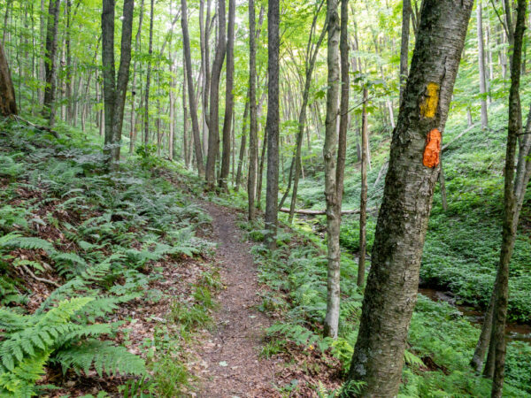 Susquehannock Trail System in Ole Bull State Park in Potter County PA