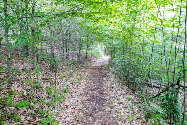 Daugherty Loop Trail in Potter County Pennsylvania