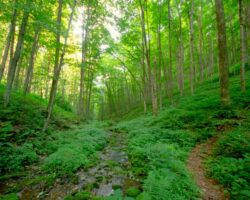 10 Great Hiking Trails Near Cherry Springs State Park