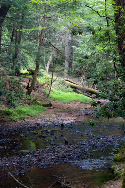 Toms Run in Cook Forest State Park in the Pennsylvania Wilds