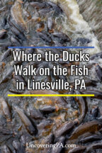 Where the Ducks Walk on the Fish in Linesville, Pennsylvania