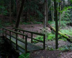 Hiking the Falling Run Nature Trail in Goddard State Park