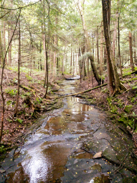 Falling Run in Goddard State Park in PA