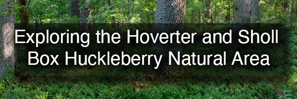 Hiking in the Hoverter and Sholl Box Huckleberry Natural Area in Pennsylvania