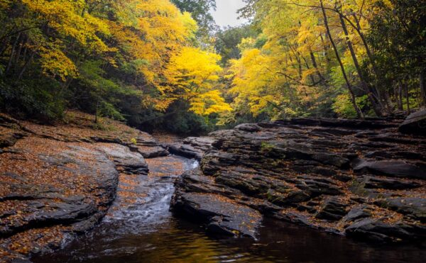 Where to see fall foliage in the Laurel Highlands