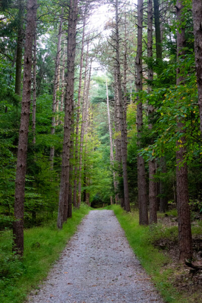Hiking Middle Road in Nolde Forest in Berks County PA