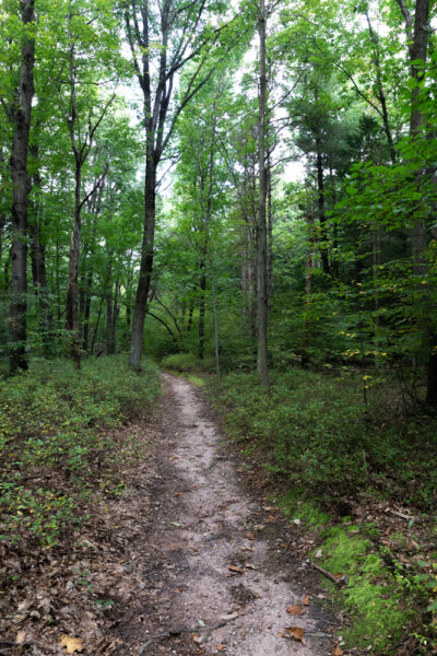 The Laurel Path in Nolde Forest in Berks County PA