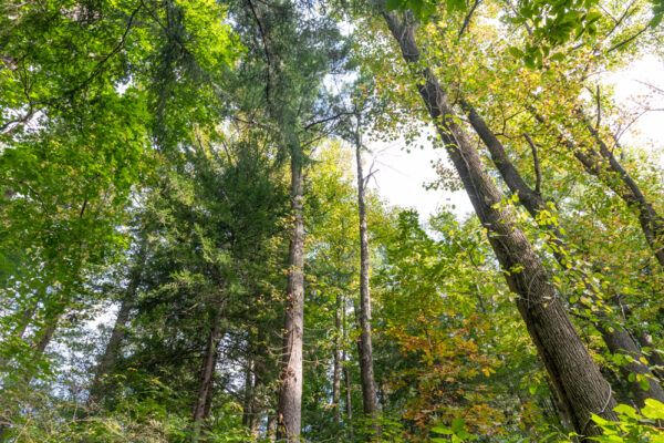 Looking up at trees in Nolde Forest Environmental Education Center in Reading Pennsylvania
