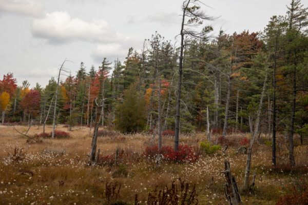 Looking out at trees in Spruce Flats Bog in Westmoreland County PA
