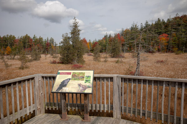 Information Sign at Spruce Flats Bog in Pennsylvania's Laurel Highlands