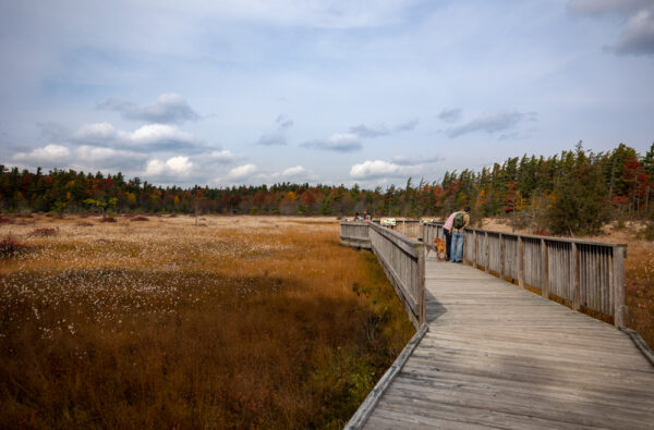 Spruce Flats Bog in the Laurel Highlands of Pennsylvania
