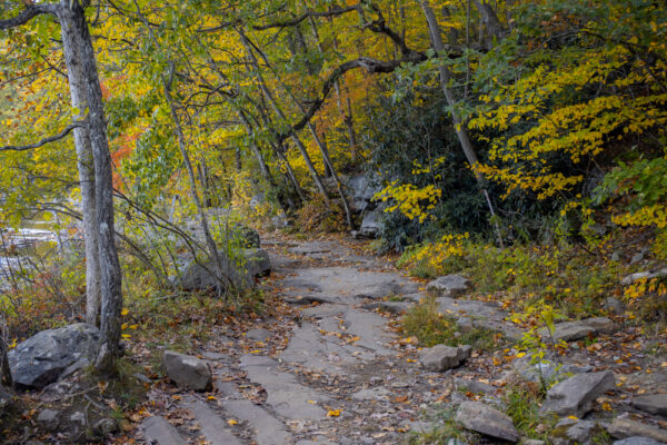 Ferncliff Trail in Ohiopyle State Park in the Laurel Highlands