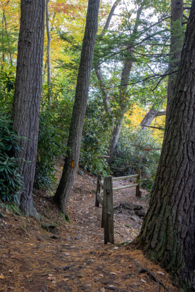 Trail on Ferncliff Peninsula in Ohiopyle State Park