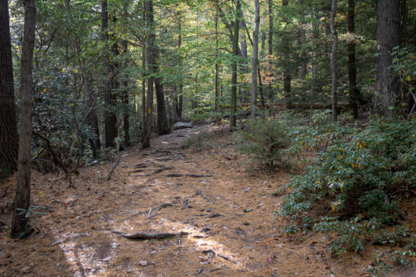 Trail for hiking on Ferncliff Peninsula in Ohiopyle State Park