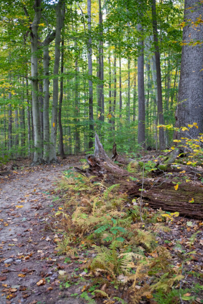 Fernwood Trail in Ohiopyle State Park in PA