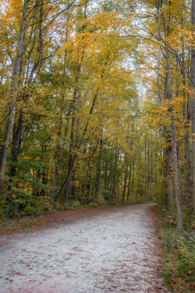 Great Allegheny Passage in Ohiopyle State Park