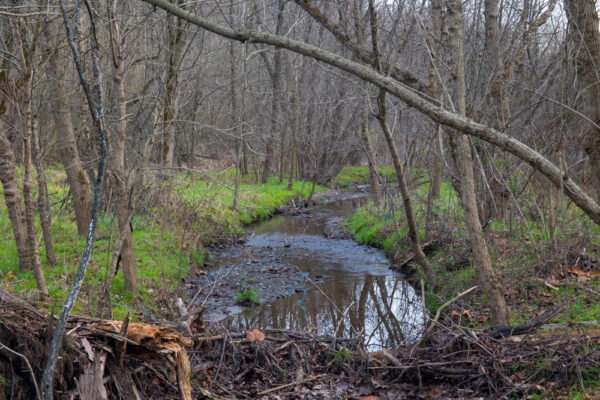Stream through Silver Mine Park in Lancaster County PA