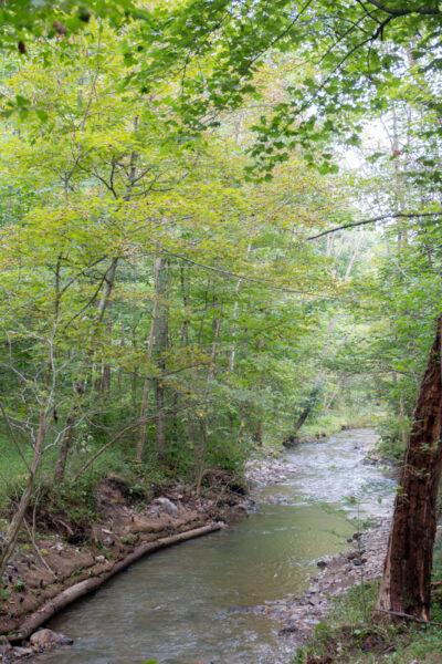 Mary Ann's Creek in Canoe Creek State Park