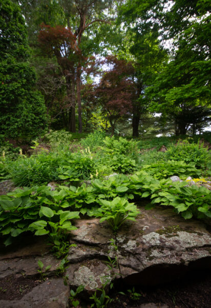 Foliage at the Sunken Gardens at Mount Assisi in Loretto Pennsyvlania