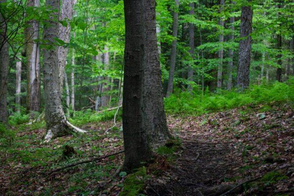 Gerard Trail in Oil Creek State Park