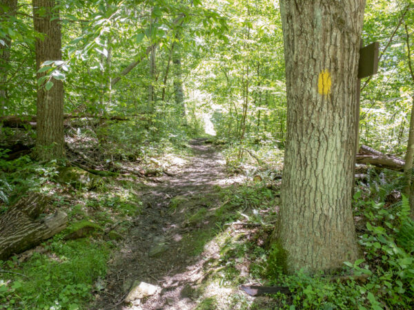 Trail to Plum Dungeon Falls in Oil Creek State Park in PA