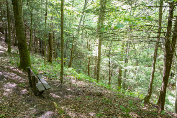 Bench on the Gerard Trail in Oil Creek State Park