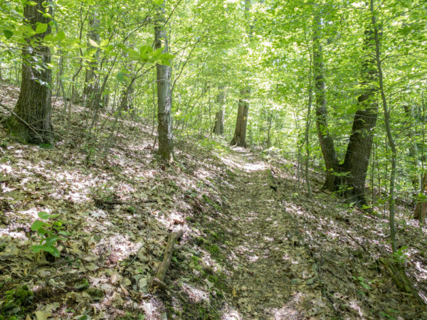 Gerard Trail near Plum Dungeon Falls in Oil Creek State Park