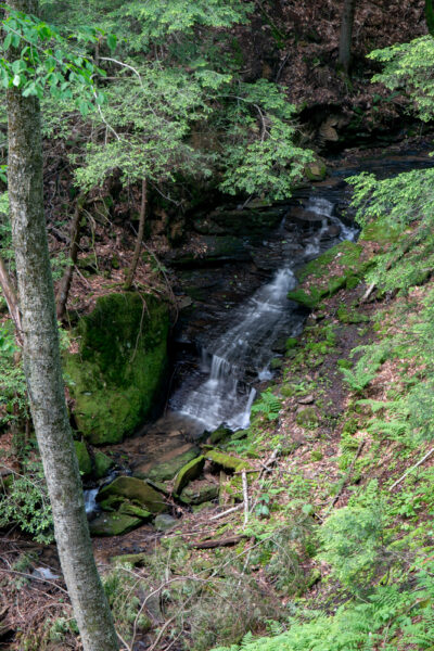 Plum Dungeon Falls in Oil Creek State Park