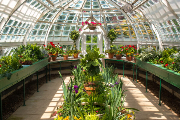 Inside the Frick greenhouse in Pittsburgh Pennsylvania