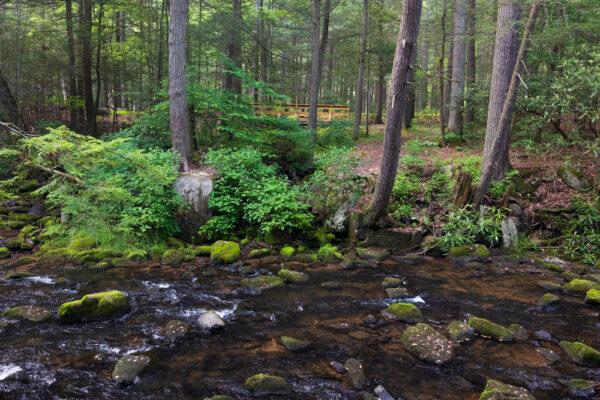 Honey Creek in Reeds Gap State Park in Mifflin County PA