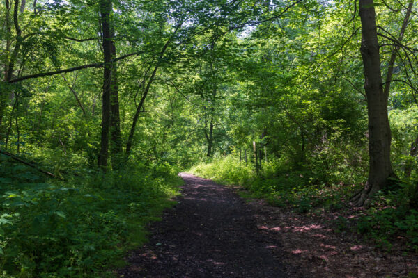 Trail at the Beechview Seldom Seen Greenway in Pittsburgh PA