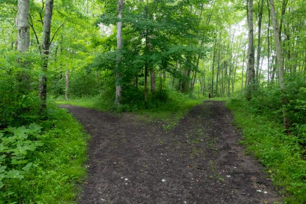 Trail split along the Sunken Garden Trail in Moraine State Park in Butler County, Pennsylvania