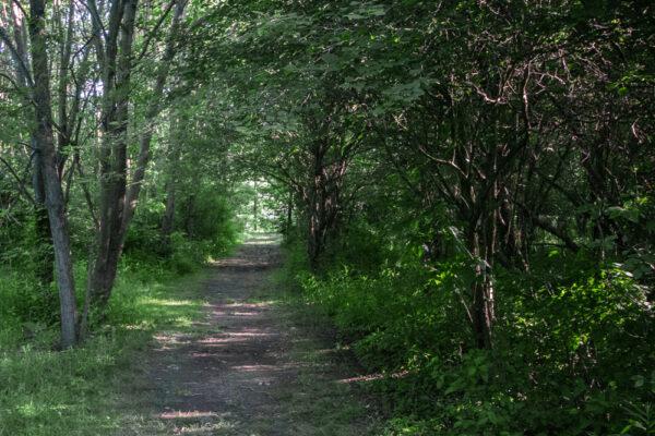 Sunken Garden Trail in Moraine State Park passing through a dense woodland.