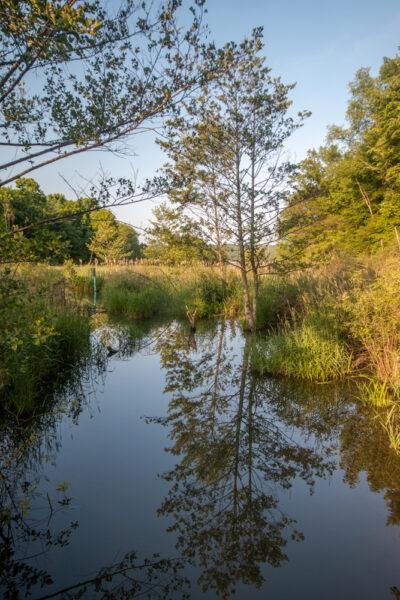 Marshes on Lake Arthur along the Sunken Garden Trail
