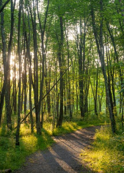 Tall trees surround the Sunken Garden Trail in Moraine State Park