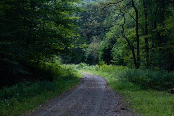 The Clarion-Little Toby Creek Trail passes through a forested part of Elk County PA