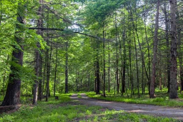 Buchanan State Forest along Oregon Road